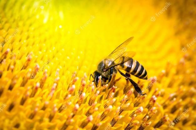 Закупка меду