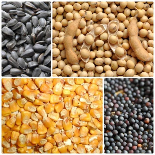 Завод з переробки сої може купити сою та інші олійні культури оптом і в роздріб