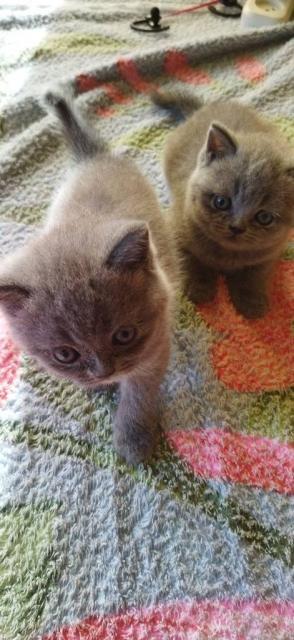 Милые игривые ласковые плюшевые котята