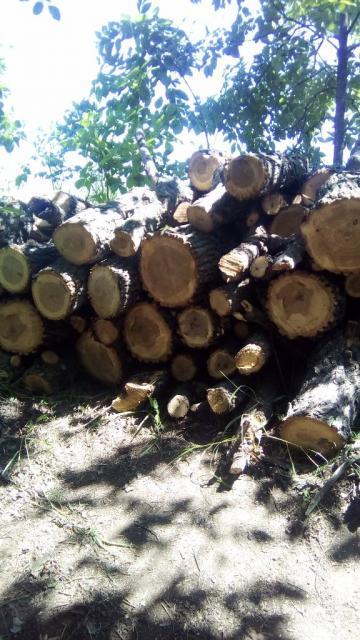 Продам дрова. Спил проблемных деревьев.